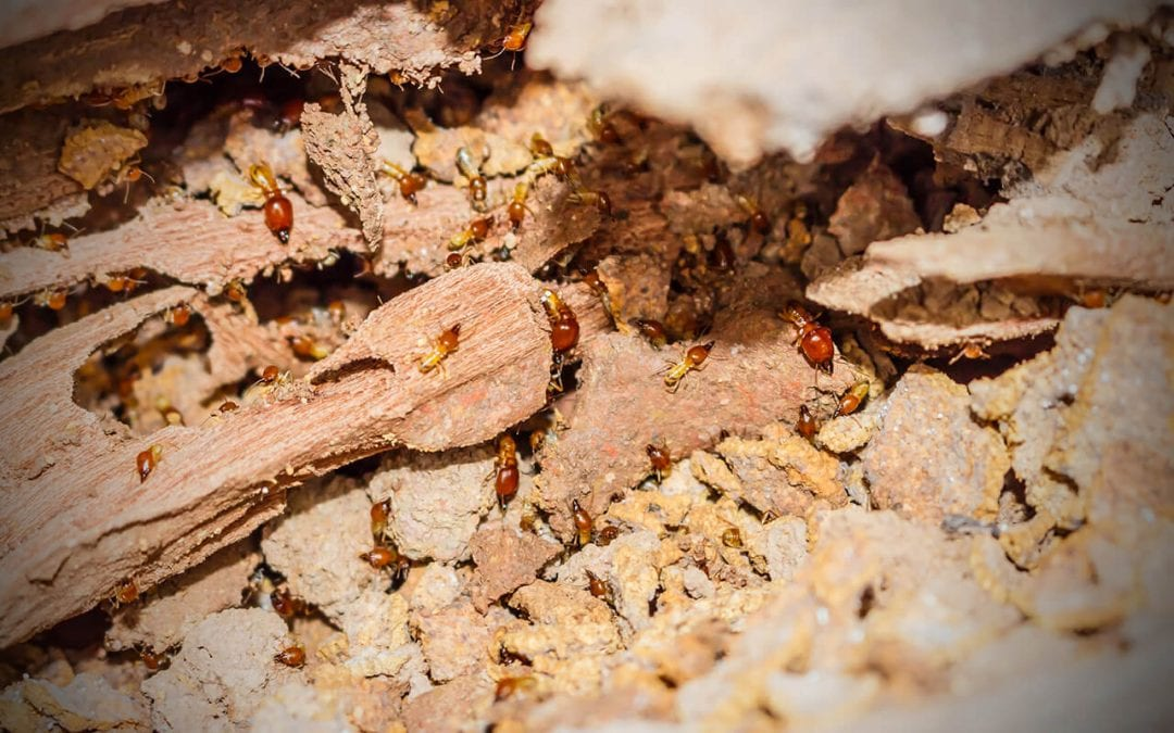 4 Ways to Prevent Termite Damage at Home